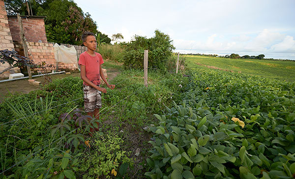 Rostan Gustavo Oliveira do Santos, 14, stands at the fence separating his family's house from huge fields of soybeans in Santarem, Brazil. Pope Francis says the harm being done to the environment is not only about pollution, but includes dangerous attitudes toward other human beings as well as economic practices that hurt people and the land and resources they depend on. CNS photo/Paul Jeffrey